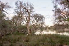 Vida do pantanal em Manning Lake imagem de stock