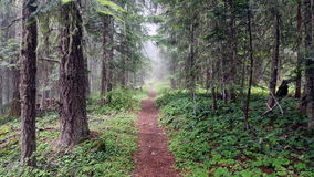Vida do parque nacional Imagem de Stock