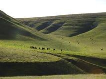 Vida do rancho Fotografia de Stock Royalty Free