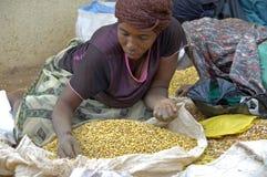 A vida dos povos da maneira em Uganda Mulher que vende feijões e que escolhe o Imagem de Stock
