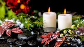 A vida dos termas do inverno ainda do vermelho sae com as gotas, neve, sempre-verde Fotografia de Stock