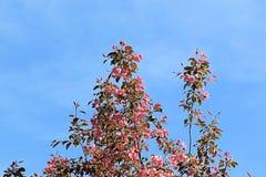 Vida e amor bonitos da árvore de maçã de florescência fotos de stock