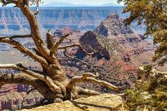 Vida e morte ao longo da borda norte de Grand Canyon no Arizona fotografia de stock royalty free