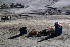 Vida em Mt Bromo Imagens de Stock