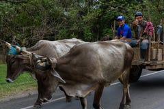 Vida em Nicarágua Foto de Stock Royalty Free