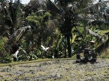 Vida em Ubud Foto de Stock Royalty Free