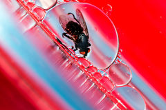 Vida em uma bolha Fotografia de Stock Royalty Free