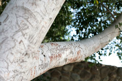 Vida en árbol Foto de archivo libre de regalías
