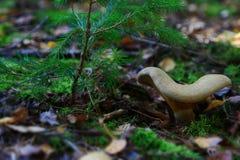 Vida en el bosque del otoño Imagen de archivo