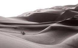 Vida en el desierto de Liwa Fotos de archivo