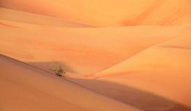 Vida en el desierto de Liwa Imágenes de archivo libres de regalías