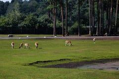 Vida en el parque zoológico Fotos de archivo
