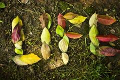 Vida en hojas Fotos de archivo