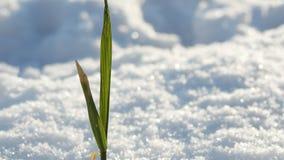 Vida en invierno Fotos de archivo libres de regalías