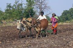 Vida en la India rural Imagen de archivo libre de regalías