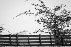 Vida en las calles Fotos de archivo libres de regalías
