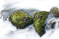 Vida en rocas del río Fotografía de archivo