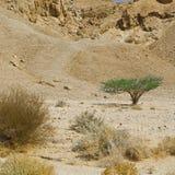 Vida en un desierto sin vida Imagen de archivo