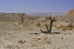 Vida en un desierto sin vida Foto de archivo