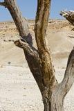 Vida en un desierto sin vida Fotos de archivo libres de regalías