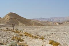 Vida en un desierto sin vida Imagenes de archivo