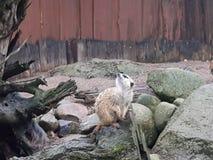 Vida en un parque zoológico Fotos de archivo