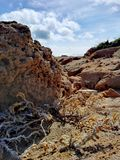 Vida entre lasów rocas Fotografia Royalty Free