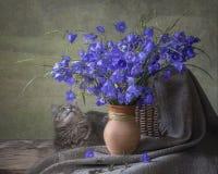 Vida floral del verano aún con las flores y el gato de campana Imagen de archivo