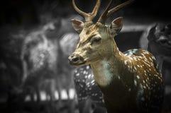 A vida gosta de um cervo! Imagem de Stock