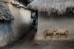 Vida indiana da vila Foto de Stock Royalty Free