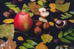 Vida lluviosa del otoño aún Imagen de archivo libre de regalías
