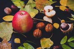Vida lluviosa del otoño aún Imagenes de archivo
