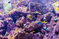 Vida marina Fotos de archivo libres de regalías