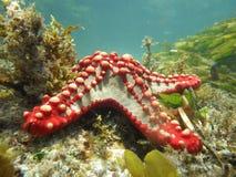 Vida marina imagen de archivo