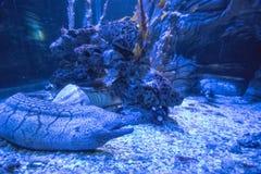 Vida marina azul Imagen de archivo libre de regalías