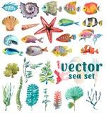 Vida marina de la acuarela, alga marina, Shell, pescado Imagenes de archivo