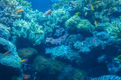 Vida marina en el oceanarium de Lisboa, Portugal Imagenes de archivo