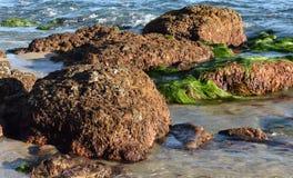 Vida marina encrustada en los cantos rodados expuestos durante la bajamar en el Laguna Beach, California Fotografía de archivo