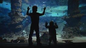 Vida marina, los niños curiosos miran pescados el nadar en acuario grande almacen de video