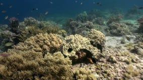 Vida marina subacuática del mundo de Bali Indonesia metrajes
