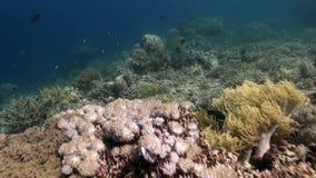 Vida marina subacuática del mundo de Bali Indonesia almacen de video
