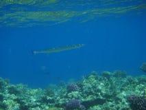 Vida marinha 5 Imagens de Stock Royalty Free