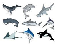 Vida marinha 5 Fotografia de Stock