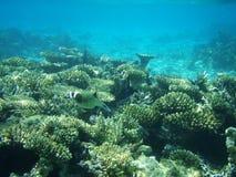 Vida marinha 6 Imagem de Stock Royalty Free