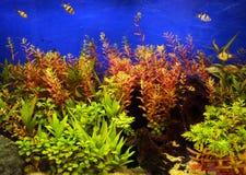 Vida marinha Imagens de Stock Royalty Free