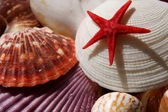 Vida marinha Fotos de Stock Royalty Free