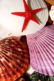 Vida marinha Foto de Stock Royalty Free