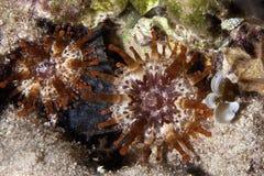 Vida marinha - Anemone subaquático imagens de stock royalty free