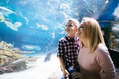 Vida marinha de observação da mãe e do filho no oceanarium fotos de stock royalty free