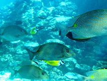 Vida marinha de Townsville tropical Fotografia de Stock Royalty Free